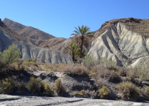 TABERNAS DESERT, PALM TREES